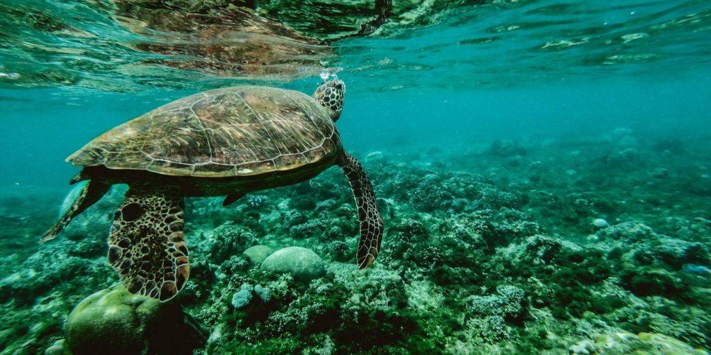 A korall zátonyok 2040-re teljesen eltűnhetnek a Földről