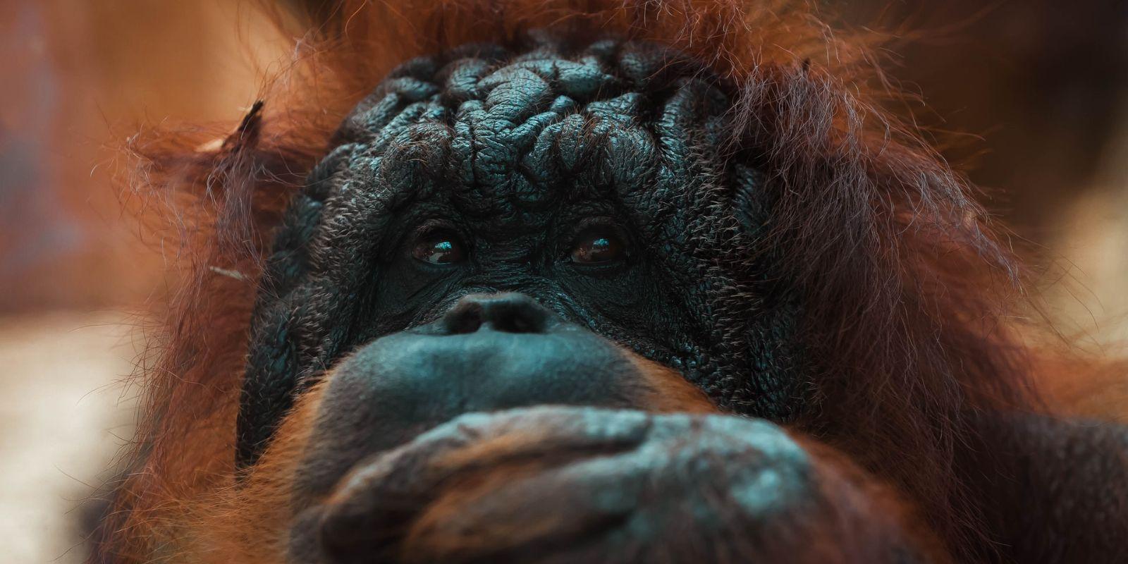 biodiverzitás, veszélyeztetett fajok, kihaló fajok, globális környezeti problémák