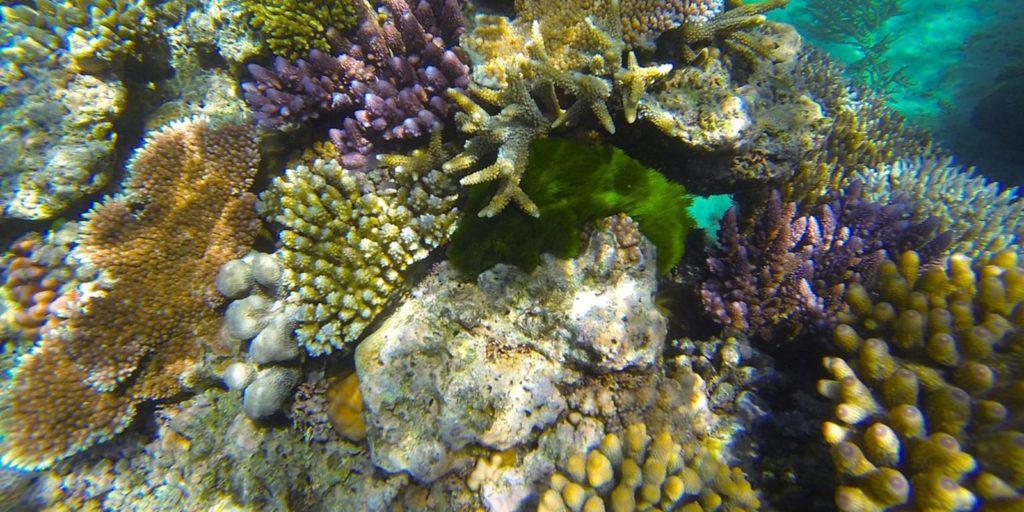Színes víz alatti korallok