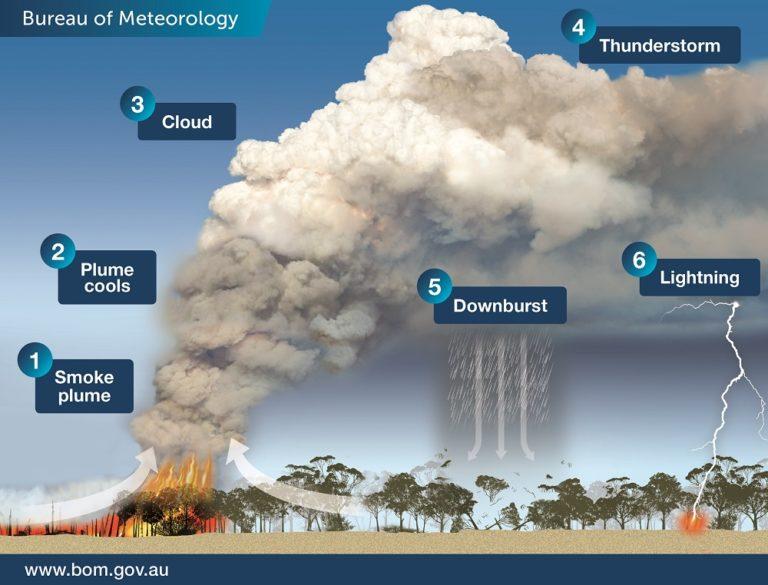 Tűz Ausztráliában: 10 ok és 10 következmény | xforest.hu